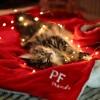 Plaid Christmas Bliss