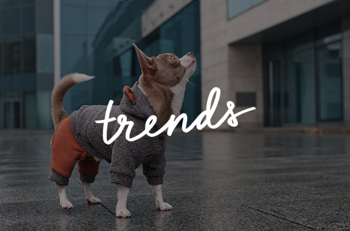 Shop Trends Collection